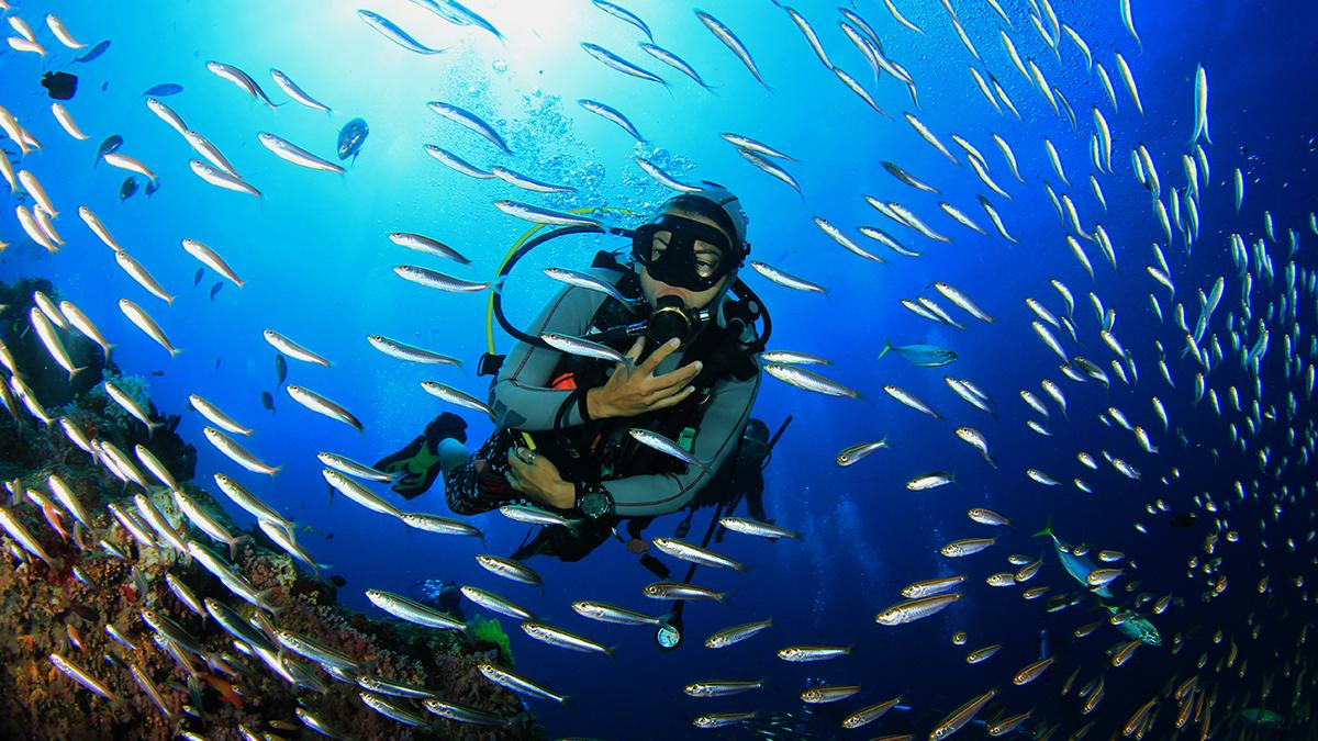 XII Semana Científica Telesforo Bravo «Investigando el mar: viaje al planeta agua»